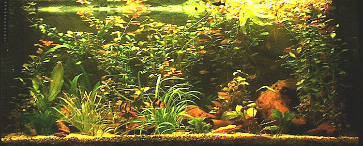 aquarium privat
